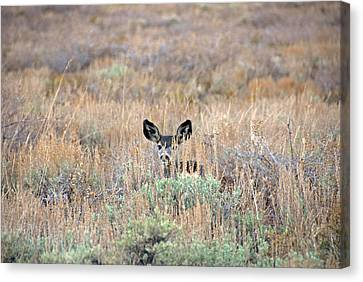 Canvas Print featuring the photograph Babe In Hiding by Lynn Bauer