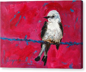 Baby Bird On A Wire Canvas Print by Patricia Awapara