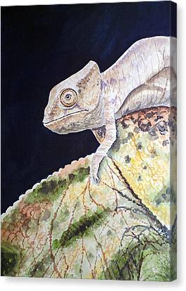 Baby Chameleon Canvas Print by Irina Sztukowski