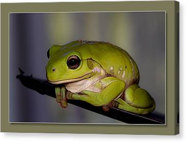 Canvas Print featuring the digital art Baby Frog by Kevin Chippindall