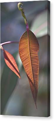 Canvas Print featuring the photograph Baby Gum. by Carole Hinding