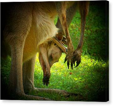Kangaroo Canvas Print - Baby In The Pouch by Joyce Kimble Smith