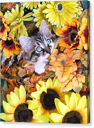 Baby Kitty Cat Munching Fall Leaves - Cute Kitten In Autumn Colors With Sunflowers - Fall Time Canvas Print by Chantal PhotoPix