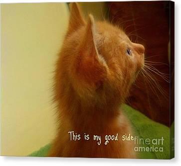 Baby Kitty Canvas Print