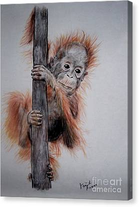 Baby Orangutan  Canvas Print by Jim Fitzpatrick