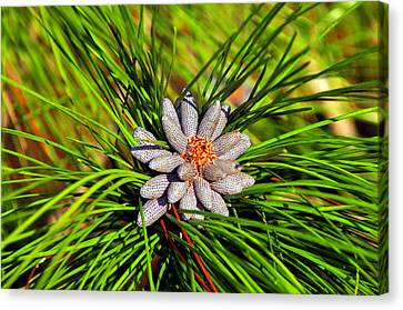 Baby Pine Cones Canvas Print by David Lee Thompson