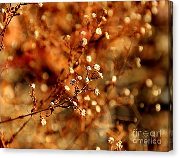 Babys Breath  Canvas Print