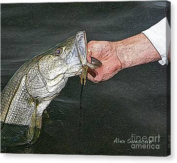 Back Bay Snook Canvas Print by Alex Suescun