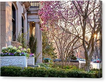 Canvas Print featuring the photograph Back Bay Spring by Susan Cole Kelly