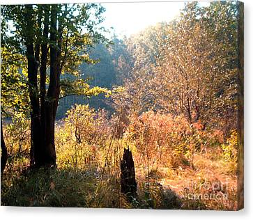 Canvas Print featuring the painting Back Lit Trees by Gretchen Allen