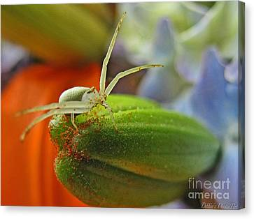 Canvas Print featuring the photograph Back Off by Debbie Portwood