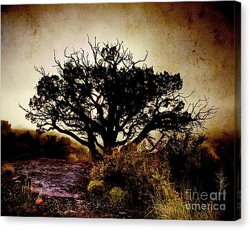 Stretched Canvas Print - Backlight Iv by Arne Hansen