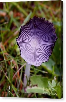 Backyard Mushroom Canvas Print by Gail Salituri