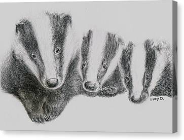 Badgers Canvas Print by Lucy D
