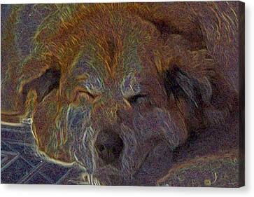 Baily May Canvas Print by One Rude Dawg Orcutt