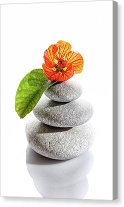 Balanced Stones And Red Flower Canvas Print by Gunay Mutlu
