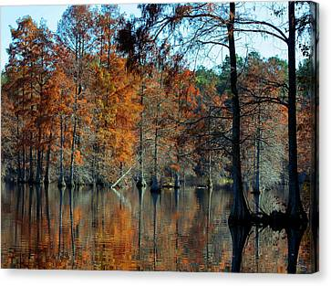 Bald Cypress In Autumn Canvas Print by Theresa Johnson
