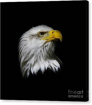 Canvas Print featuring the photograph Bald Eagle by Steve McKinzie