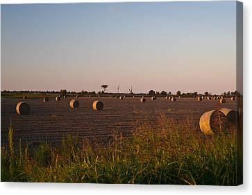 Bales In Peanut Field 10 Canvas Print by Douglas Barnett