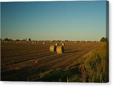 Bales In Peanut Field 13 Canvas Print by Douglas Barnett