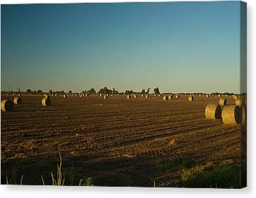 Bales In Peanut Field 9 Canvas Print by Douglas Barnett