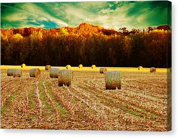 Bales Of Autumn Canvas Print by Bill Tiepelman