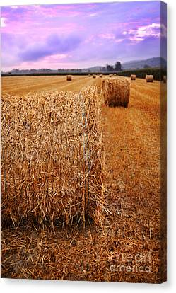 Bales Of Hay At Sunrise Canvas Print by HD Connelly