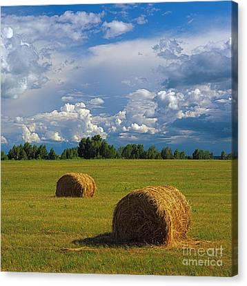 Bales Of Hay Canvas Print by Elena Filatova