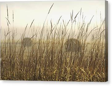 Bales Of Hay In A Field In The Fog Canvas Print by Susan Dykstra