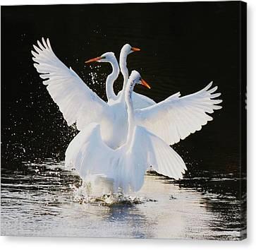 Ballet Canvas Print by Paulette Thomas