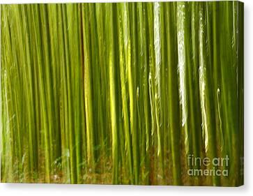 Bamboo Abstract Canvas Print