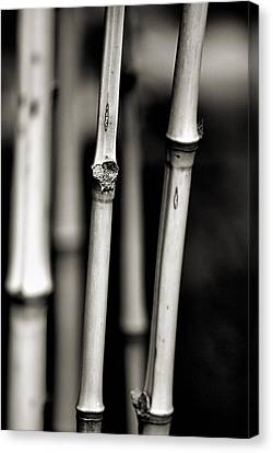 Canvas Print featuring the photograph Bamboo by Bob Wall