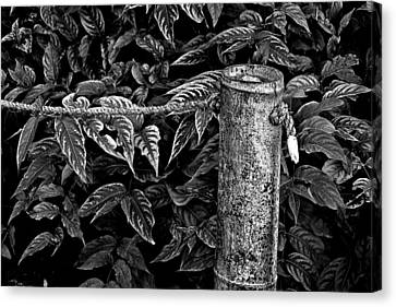 Bamboo Border Canvas Print by Burney Lieberman