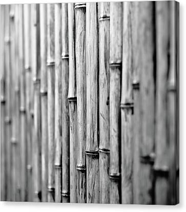Bamboo Fence Canvas Print by George Imrie Photography