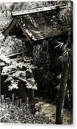 Bamboo Garden -2 Canvas Print by Alan Hausenflock