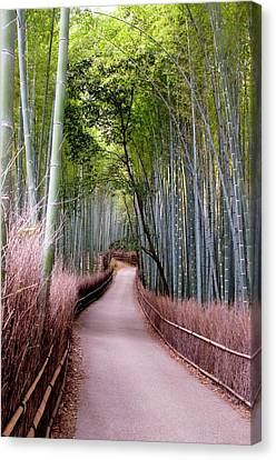 Bamboo Grove Canvas Print by Shadie Chahine