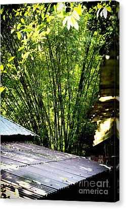 Bamboo Shade Canvas Print