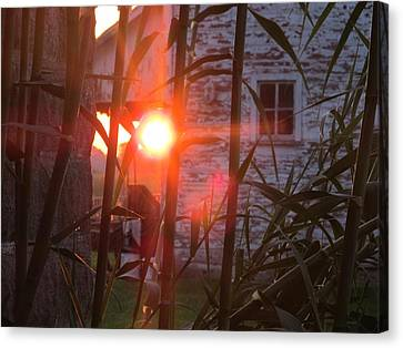 Canvas Print featuring the photograph Bamboo Sunrise by Tina M Wenger