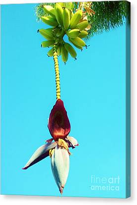 Canvas Print featuring the photograph Banana In Full Bloom by Jasna Gopic