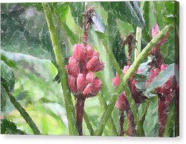 Canvas Print featuring the photograph Banana Plant by Donna  Smith
