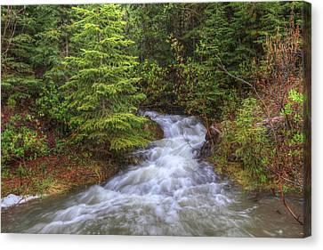 Banff Spring Creek Flow Canvas Print by Sam Amato