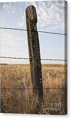 Barbed Wire Fencing And Wooden Post Canvas Print by Jetta Productions, Inc