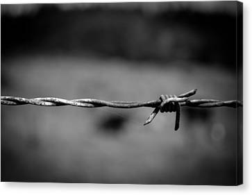 Barbed Wire Canvas Print by Raimonds Raginskis
