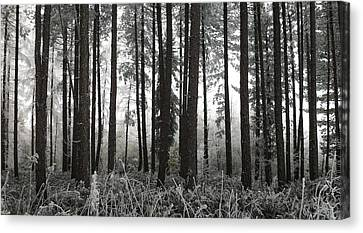 Barcode Canvas Print by Michael Standen Smith