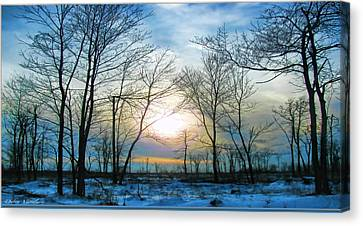 Bare Of Winter Canvas Print by Debra     Vatalaro