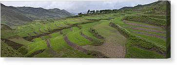 Barley Crop Grown On Terraced Hillsides Canvas Print by Phil Borges
