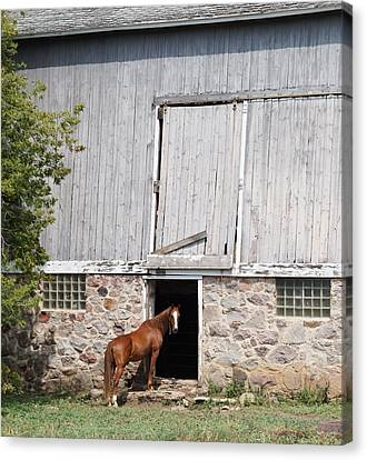 Barn And Horse Canvas Print