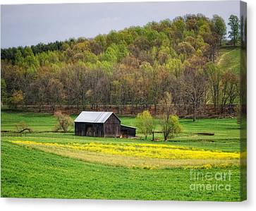 Barn In The Hollar Canvas Print by Pamela Baker