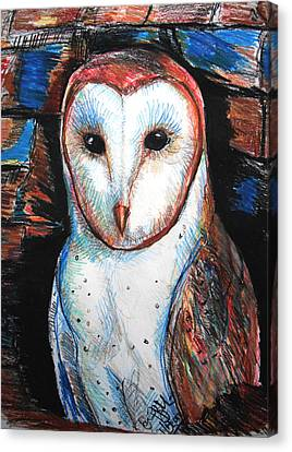 Barn Owl  Canvas Print by Jon Baldwin  Art