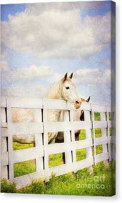 Barn Yard Dreamer Canvas Print by Darren Fisher
